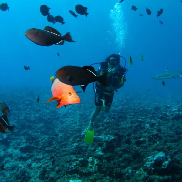 que hacer en Polinesia - BUCEO