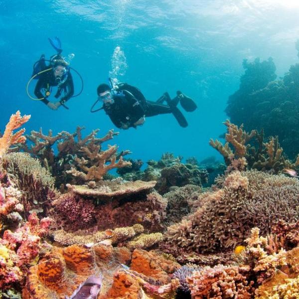 EXCURSIONES EN CAIRNS - Flynn Reef