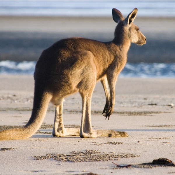 Descubre Australia - Kangaroo Island