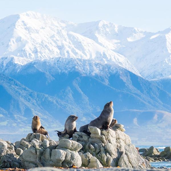 Descubre Nueva Zelanda - Kaikoura
