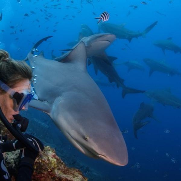 Descubre Fiji - Costa del Pacífico