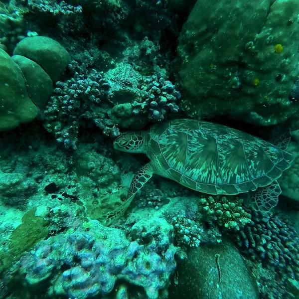 Descubre Maldivas - Atolón de Raa