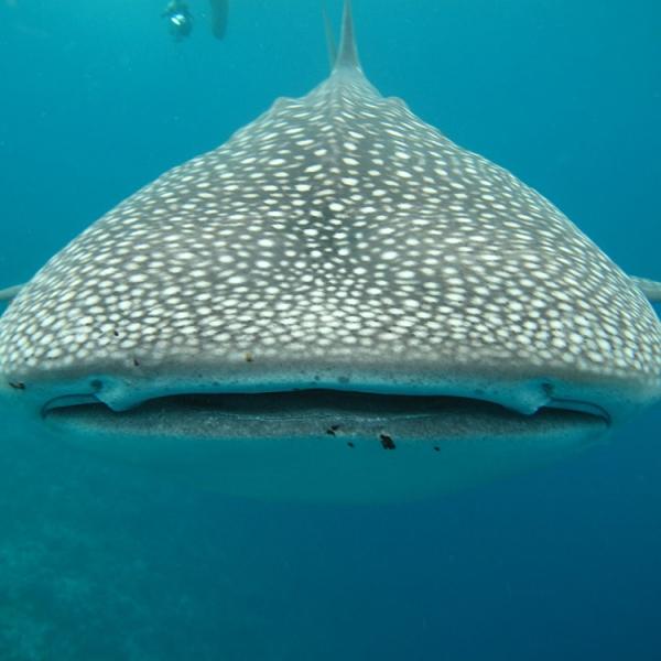 Descubre Maldivas - Atolón Ari del Sur