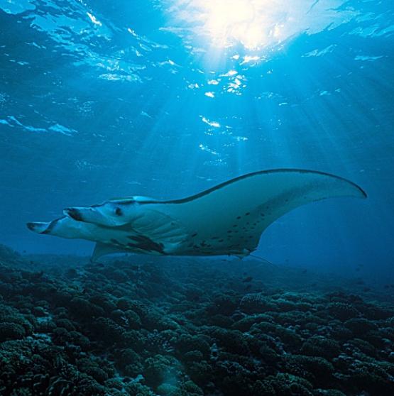 Viajar a Polinesia - SOCIEDAD Y RANGIROA